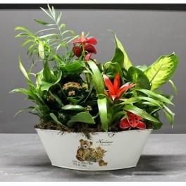 http://floristeriajerico.es/256-thickbox_leometr/cesta-de-plantas-variadas-m-10.jpg