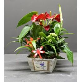 http://floristeriajerico.es/257-thickbox_leometr/cesta-de-plantas-variadas-m-1.jpg