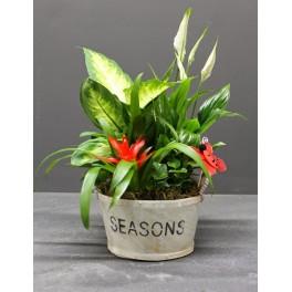 http://floristeriajerico.es/353-thickbox_leometr/cesta-de-plantas-variadas-m-7.jpg