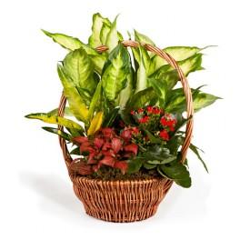 http://floristeriajerico.es/355-thickbox_leometr/cesta-de-plantas-variadas-m-5.jpg