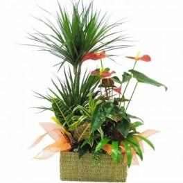http://floristeriajerico.es/356-thickbox_leometr/cesta-de-plantas-variadas-m-3.jpg