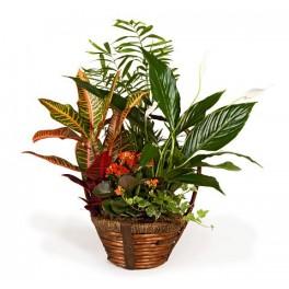 http://floristeriajerico.es/37-thickbox_leometr/cesta-de-plantas-variadas-m-2.jpg