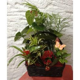 http://floristeriajerico.es/39-thickbox_leometr/cesta-de-plantas-variadas-m-4.jpg
