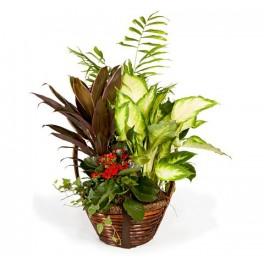 http://floristeriajerico.es/41-thickbox_leometr/cesta-de-plantas-variadas-m-6.jpg