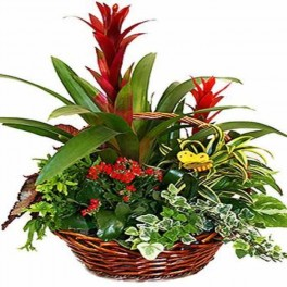 http://floristeriajerico.es/42-thickbox_leometr/cesta-de-plantas-variadas-m-7.jpg