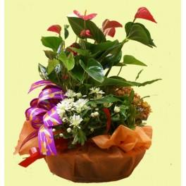 http://floristeriajerico.es/43-thickbox_leometr/cesta-de-plantas-variadas-m-8.jpg