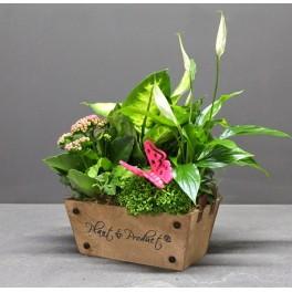 https://floristeriajerico.es/360-thickbox_leometr/cesta-de-plantas-variadas-.jpg